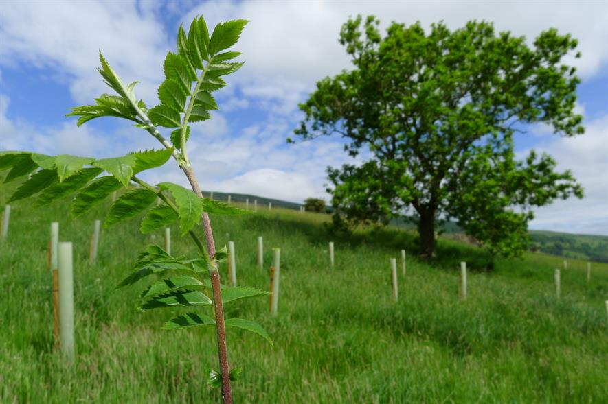 Welcome to Yorkshire (WTY) will plant a tree for every annual subscriber to its new scheme - credit: WTY