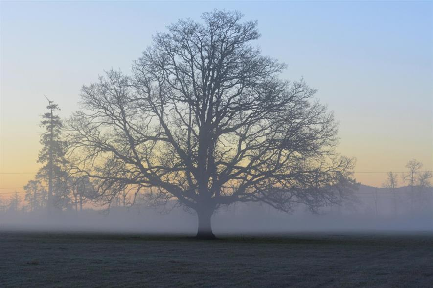 Lone tree. Image: MorgueFile
