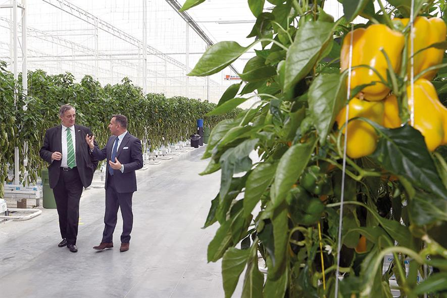 Valley Grown Nurseries: first phase of glasshouse expansion programme was unveiled in May - image: HW