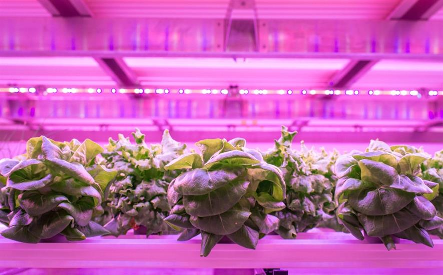 Vertical farming using the Vertivore system. Image: Astwood Infrastructure