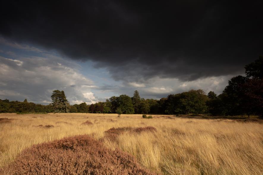 Wild Ken Hill rewilding area in West Norfolk - credit: Rewilding Britain