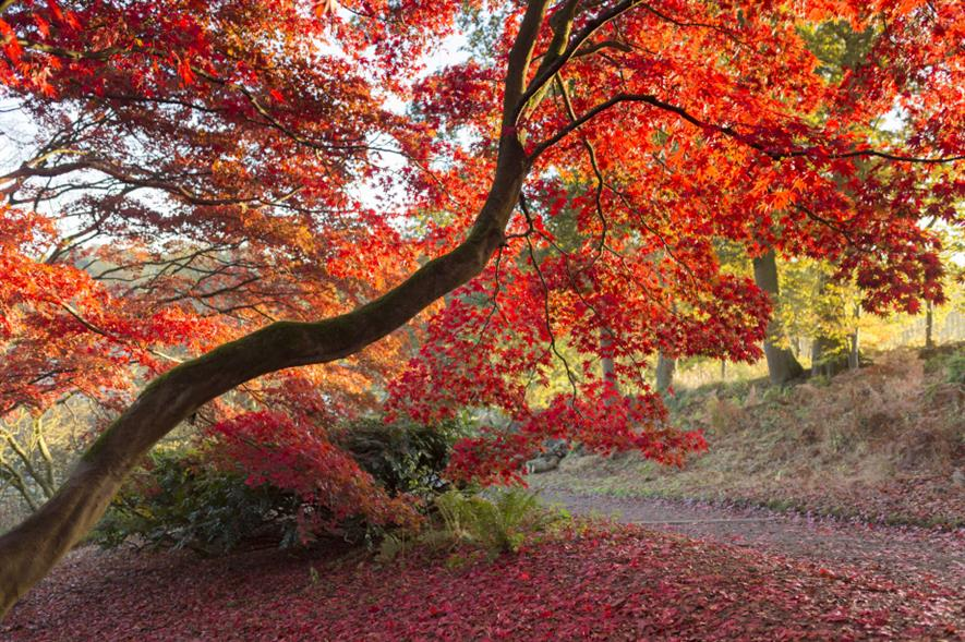 Winkworth Arboretum, Surrey - credit: National Trust/John Miller