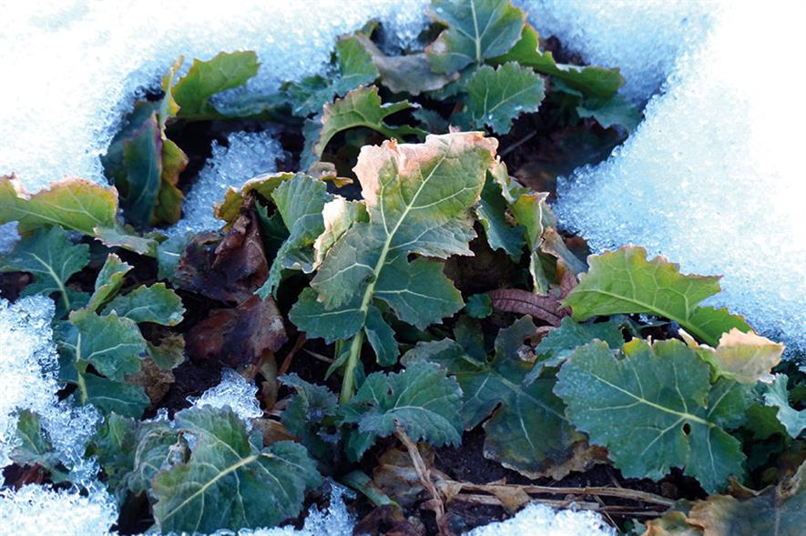 Winter vegtables: produce shortages prompt call for British crops to be embraced rather than relying on imports - image: Pixabay
