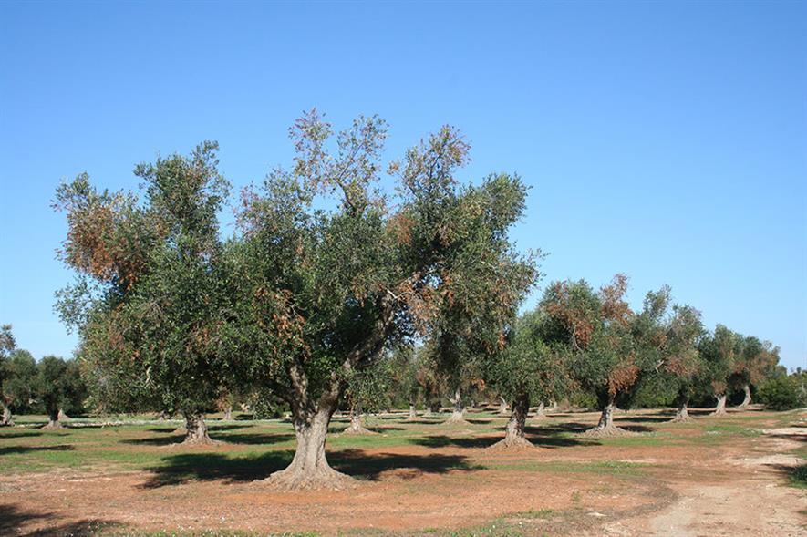 Credit: Antonio Guario, Plant Protection Service, Regione Puglia and EFSA
