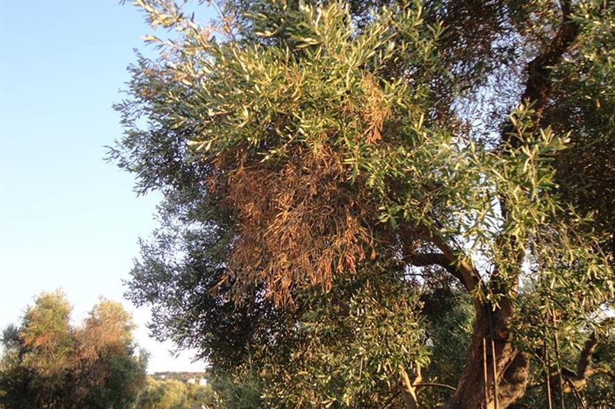 Credit: Antonio Guario, Plant Protection Service, Regione Puglia and EFSA.