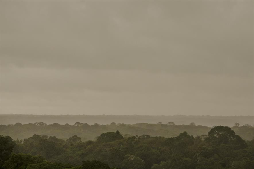 Amazon rainforest - credit: Pixabay