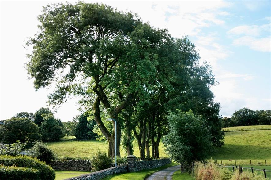 There are up to 60 million ash trees outside of woodlands in the UK - image: Dave Collier (CC SA-ND 2.0)