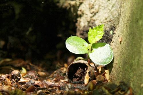 Seedling - image:Maja Dumat