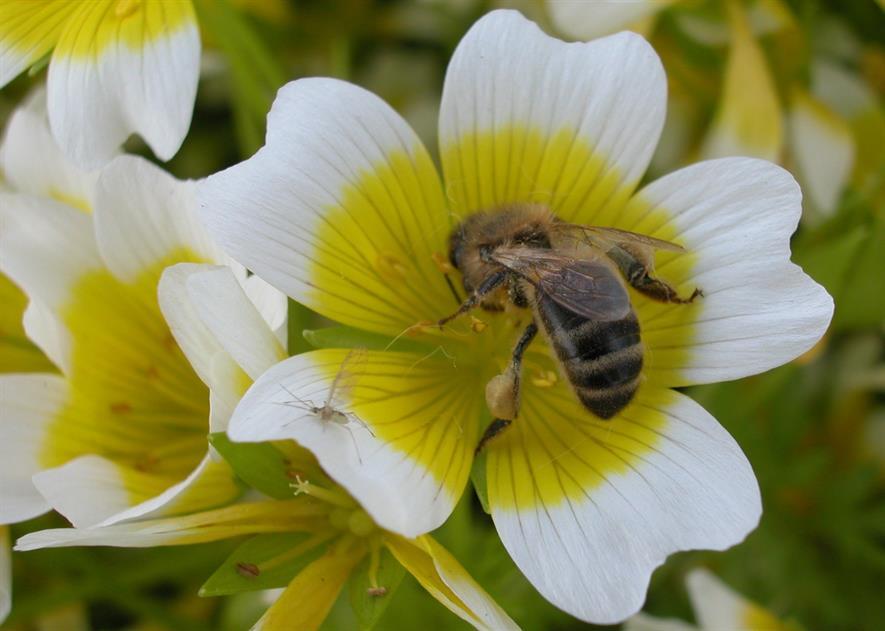 Image: Garden Organic