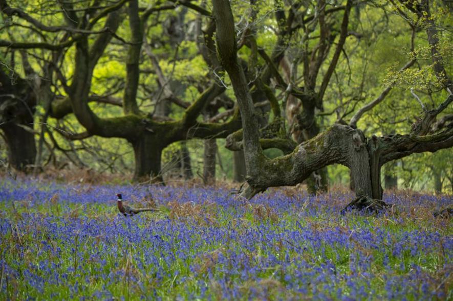 A recent biodiversity report found more than 2,800 separate species in Blenheim's High Park ancient woodlands - credit: Blenheim Estate