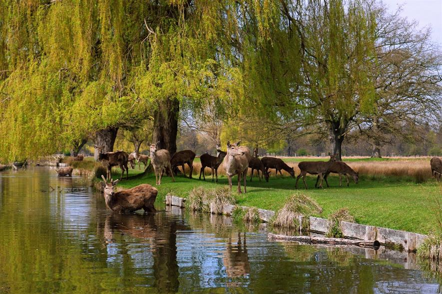 Bushy Park is one of eight locations managed by Royal Parks - image: Pixabay