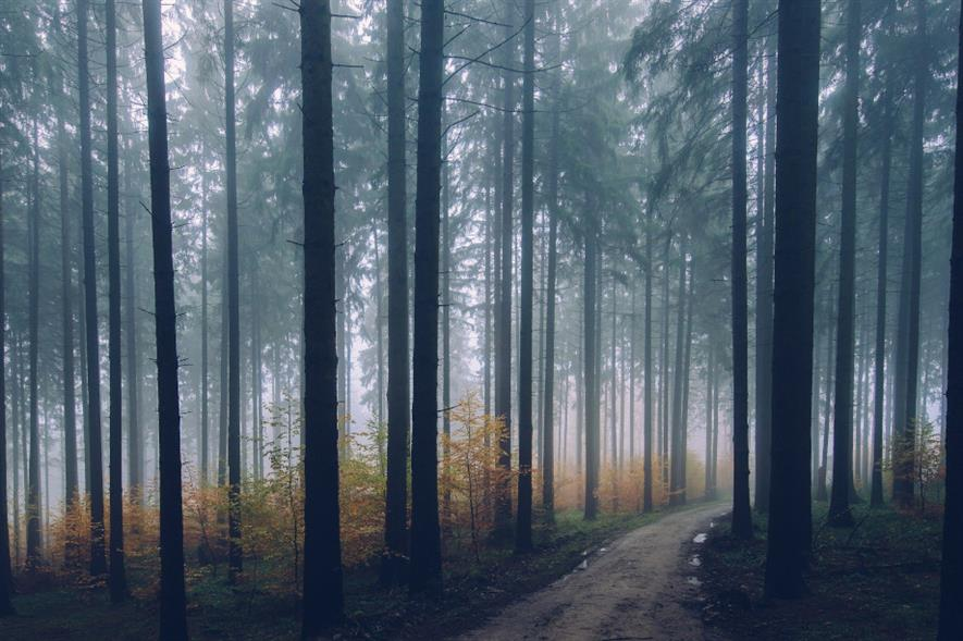 The total value of the forestry market increased 58% from £126.5m in 2019 to £200.2m in 2020 - credit: Pixabay
