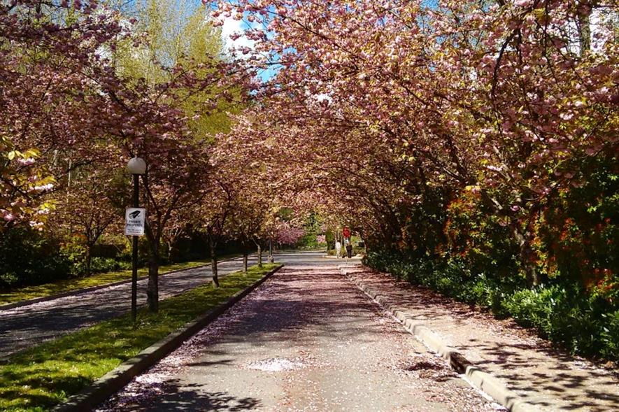 Tree-lined street. Image: MorgueFile
