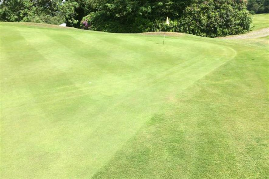 One of the trial greens after treatment. Image: Carbon Gold