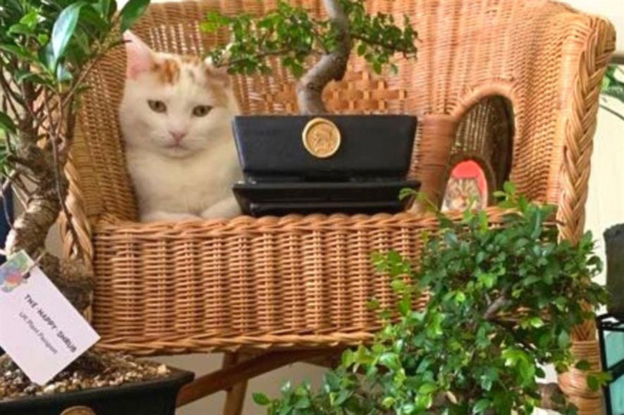 Happy Shrub's cat Chopin