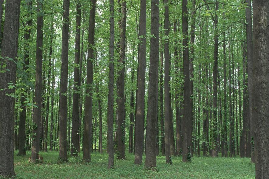 Home-grown hardwoods are essential to Tilhill's business - credit: Tilhill