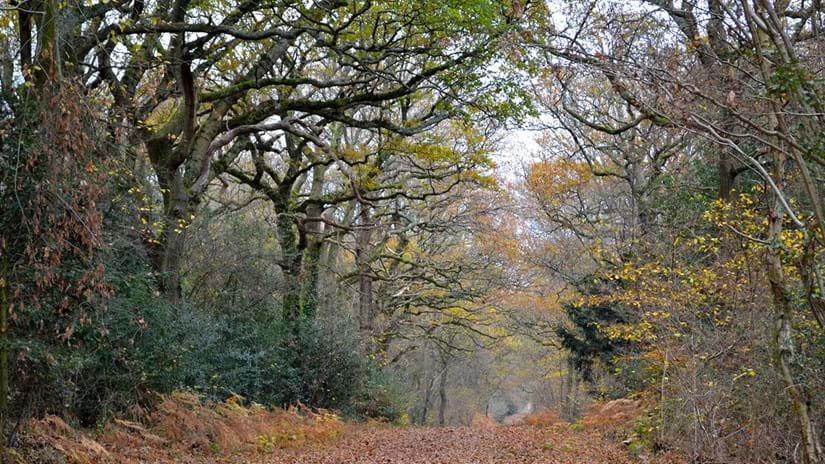 credit Woodland Trust
