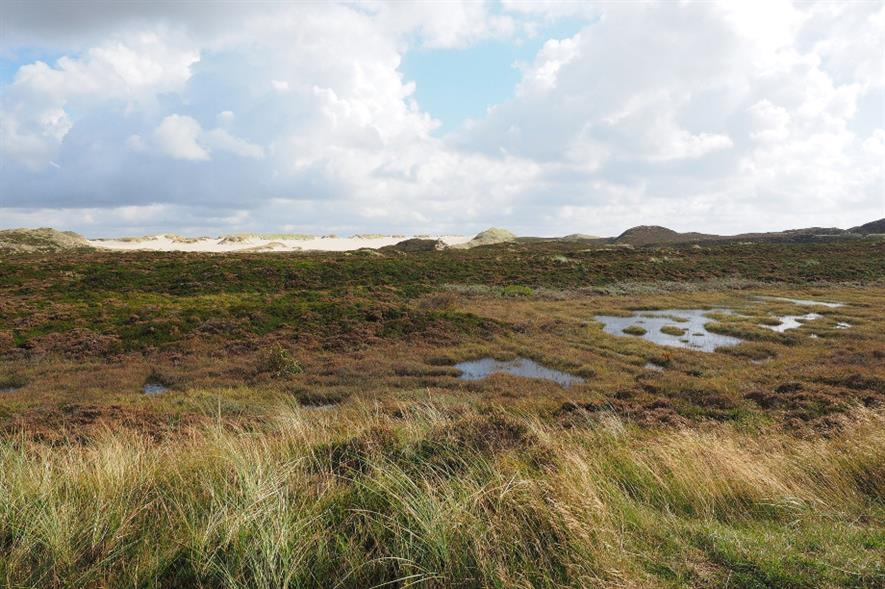 Peatlands are the England's largest carbon stores and can continue absorbing carbon indefinitely - credit: Pixabay