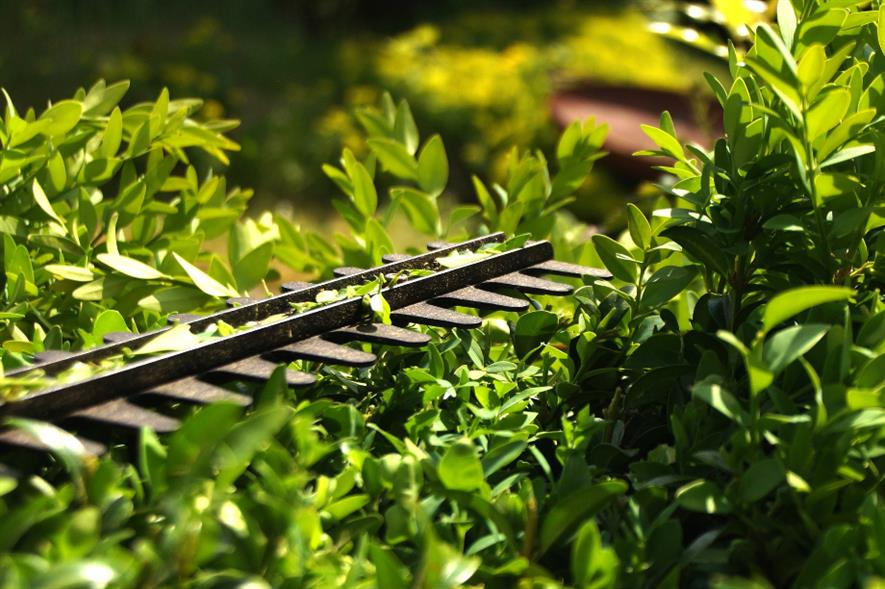 Cutting hedges at the same height every year leads to chronic over-trimming - credit: Pixabay