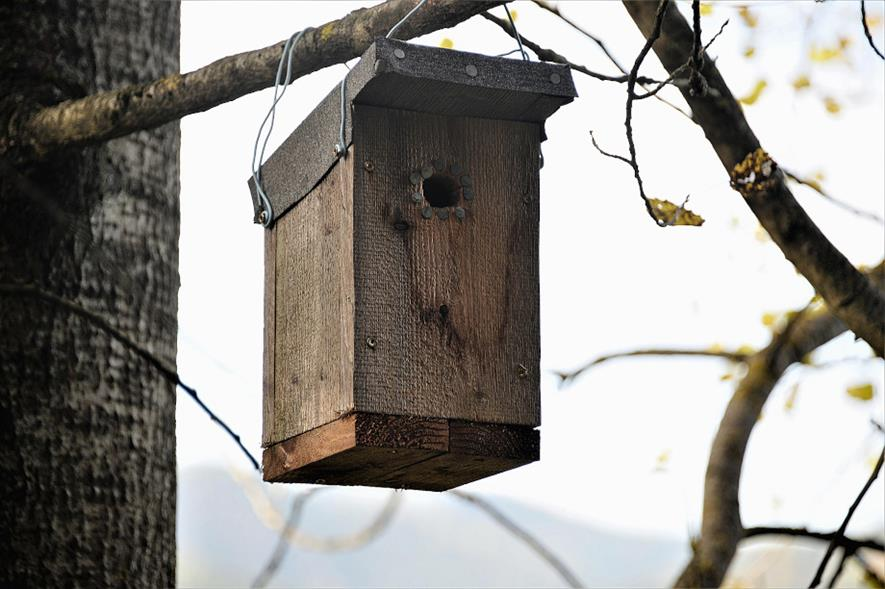 The City of Trees resources include instructions for building a bat box - credit: Pixabay