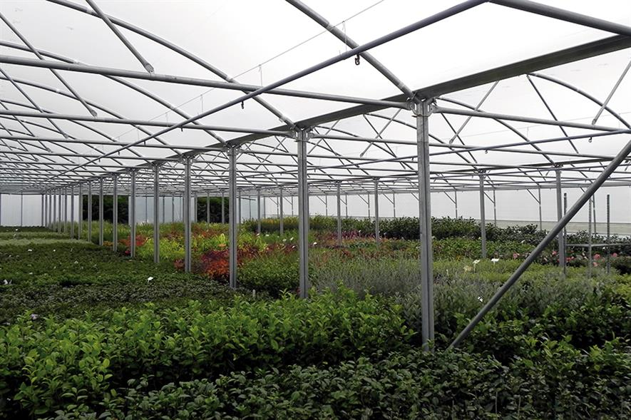 Polytunnels: multi-span plastic-clad structures give growers a construction more like a commercial glasshouse in terms of size