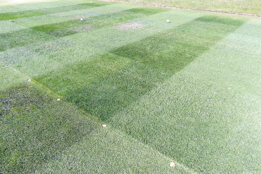 Rigby Taylor: company's sports wear trial involves 24 grass seed mixtures and blends using a differential-slip wear machine - image: HW
