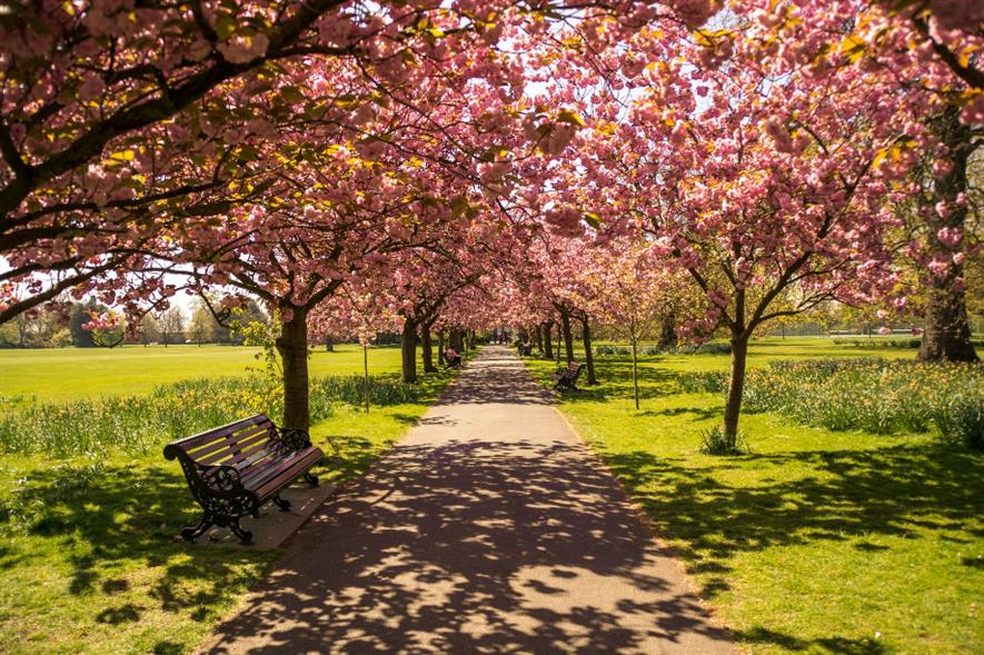 According to the report, 40% of people from ethnic minority backgrounds live in the most green-space deprived areas - credit: Pixabay