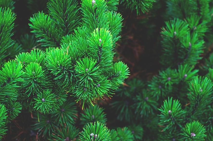 The charities expressed concern after the heathland was automatically planted with pine trees - credit: Pixabay