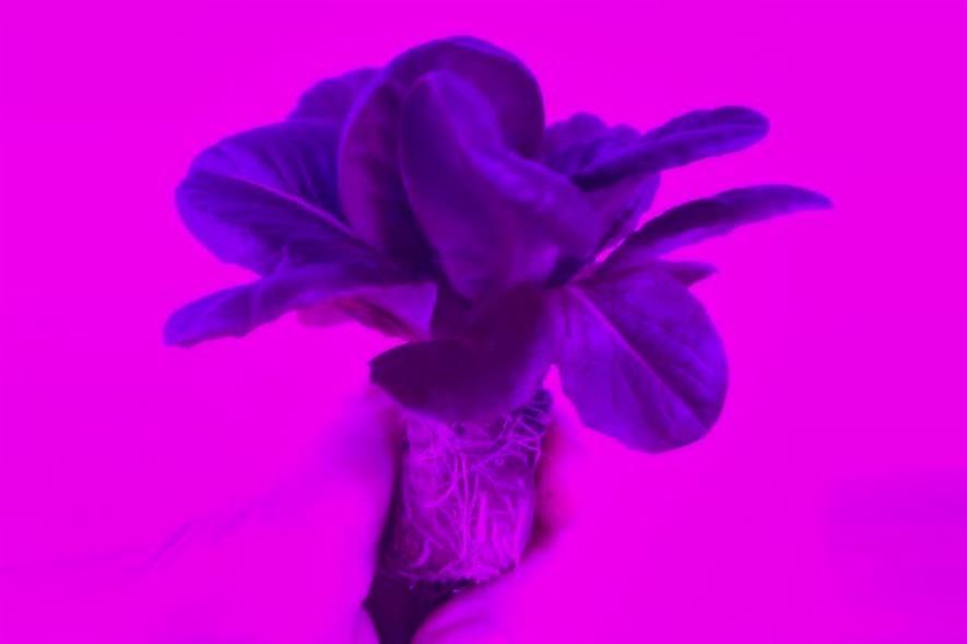 Image: Plant Raisers