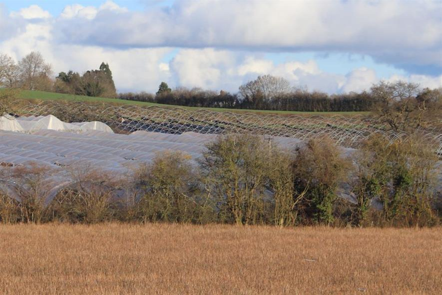Existing polytunnels in Herefordshire - image:HW
