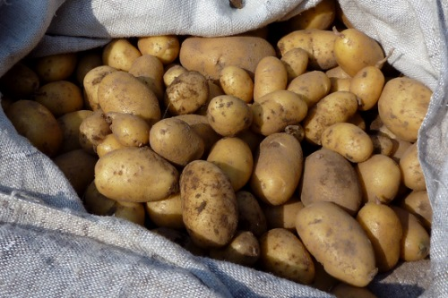 Potatoes - image: Seth Golub