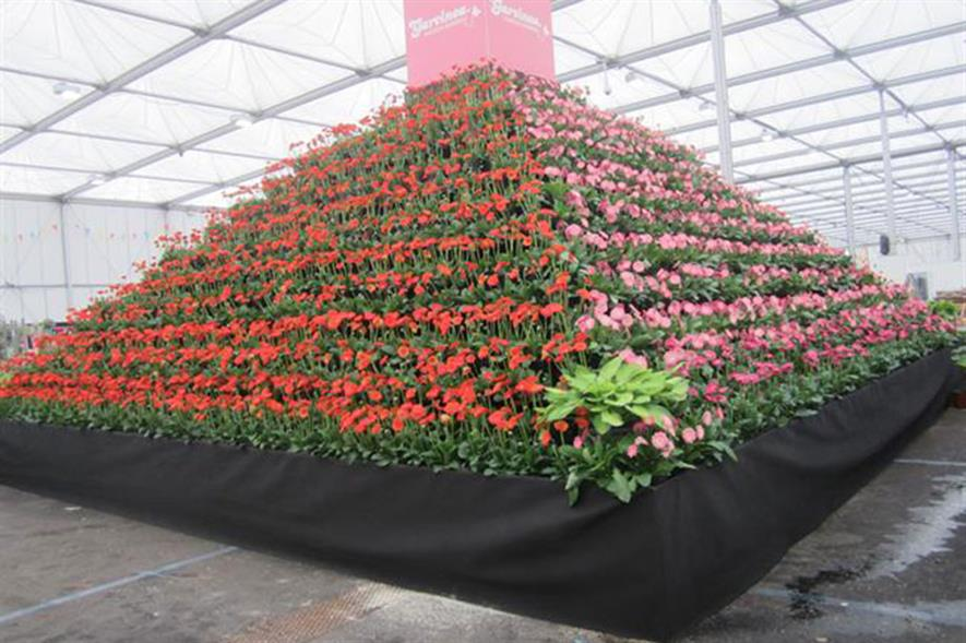Garvinea pyramid at Gardeners' World Live 2018