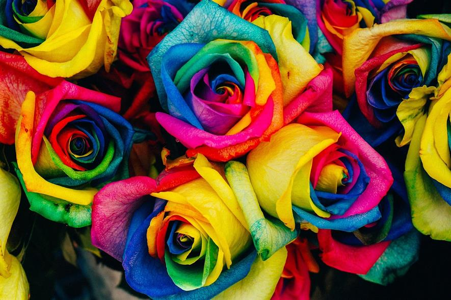 Dyed rose: credit Pixabay