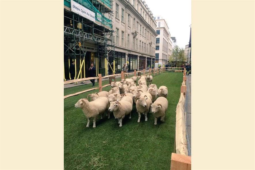 The sheep explore Savile Rowe. Image: Landform Consultants
