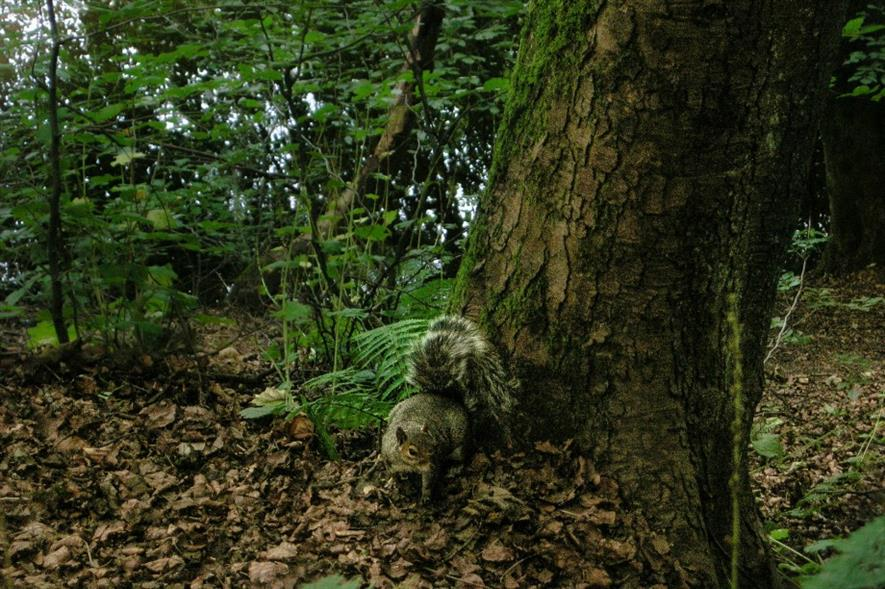 Scotland's trees under threat. Image: Pixabay