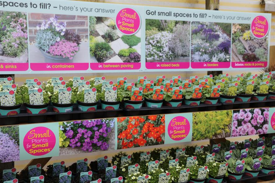 Farplants Small Plants For Small Spaces Sales Jump 94 Year On