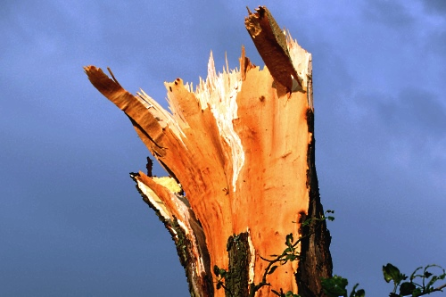 Snapped tree - image:thskyt