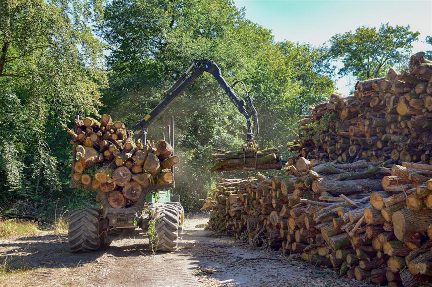 The apprenticeship schemes will provide a stepping stone into senior positions such as tree officers and forest managers - credit: Pixabay