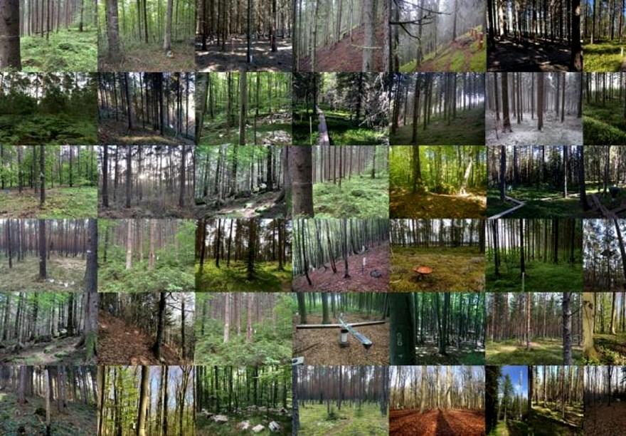 Some of the forests sampled - image: Sietse van der Linde
