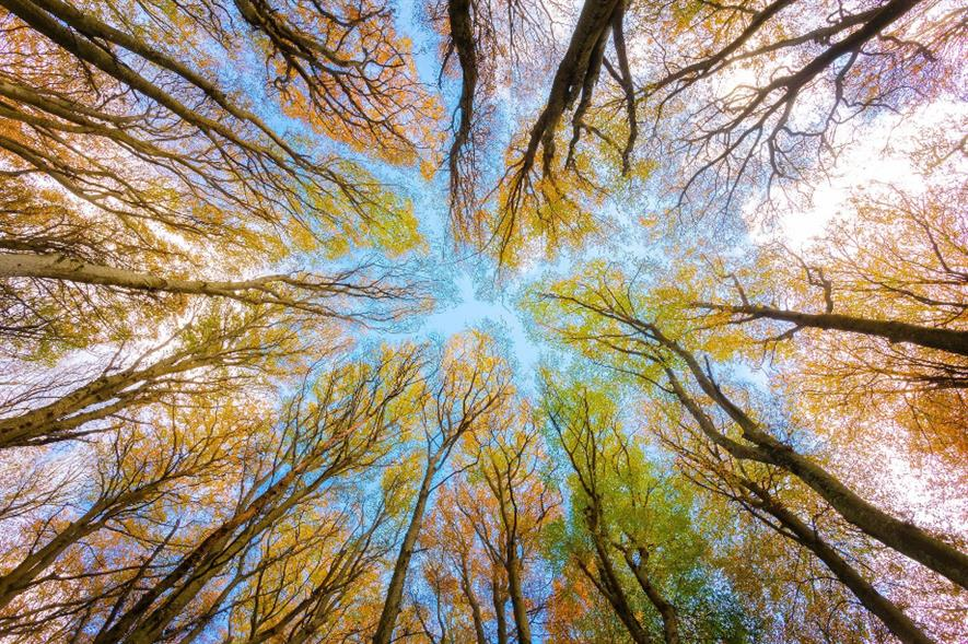 It is estimated that the trees will absorb 1.5 million kilograms of carbon dioxide - credit: Pixabay