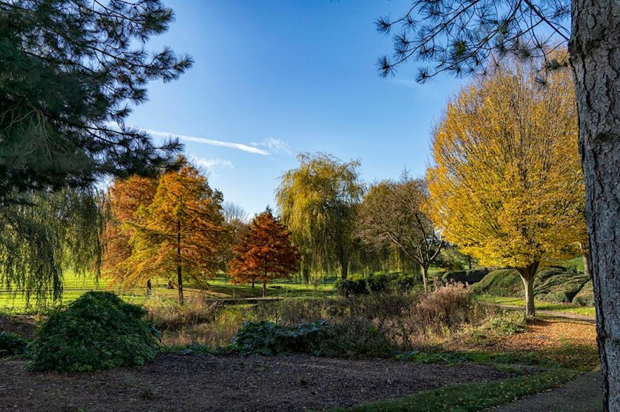 Autumnal colours at City Gardens in Campbell Park - credit: The Parks Trust