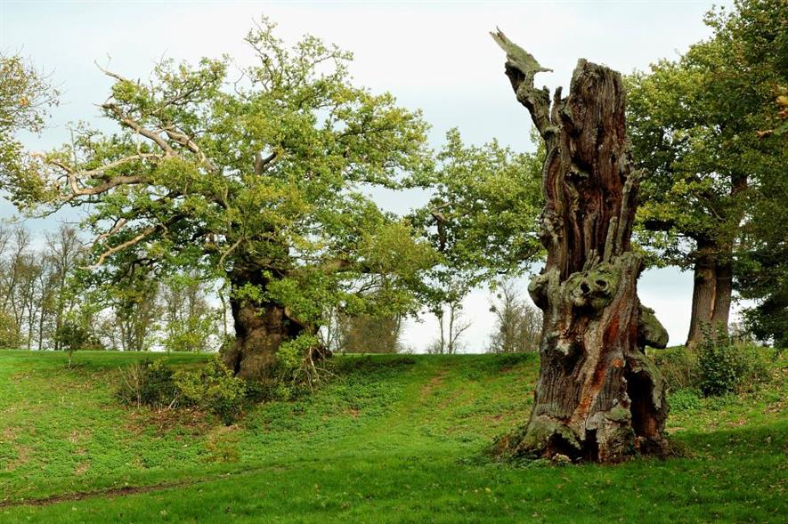 Ancient trees in Hatfield Park, Herts - image: Gary Houston (CC0)