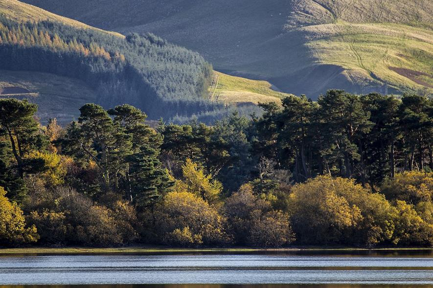 Woodland Trust Scotland has called for native tree planting targets to be increased from 40% to 50% - credit: Pixabay