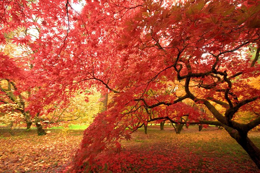 Westonbirt Arboretum- image: Flickr/Gerry Fox (CC BY 2.0)