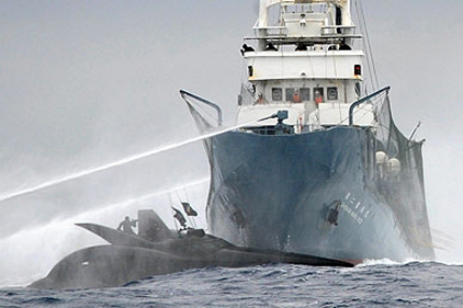 Collision: whaling vessel and eco boat crash