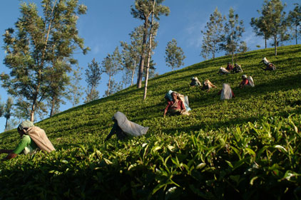 Target audience: tea pickers in Sri Lanka could share a phone