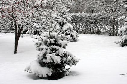Snow: everywhere