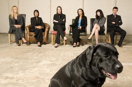 Agency snares Mark de Wolf: Man Bites Dog