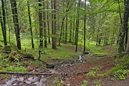 Woodland: Forestry Commission Scotland want to encourage its use