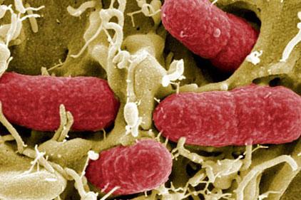 HPA: quelling fears over E coli outbreak